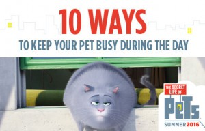 Keep-Pets-Busy-10-Ways
