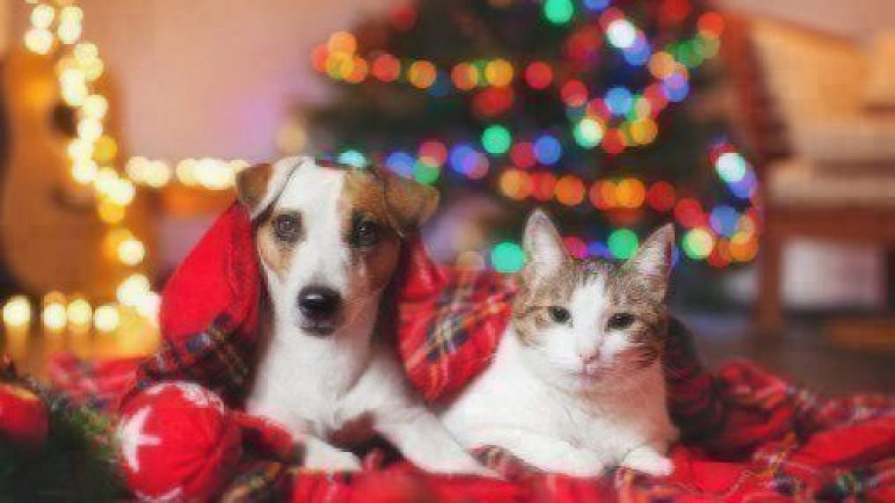 celebrate holidays with pets