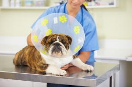 tips for pets after surgery