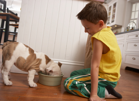 dog eating from bowl with young boy