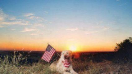 4th of july fireworks dog