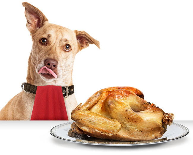 Dog with a cooked turkey