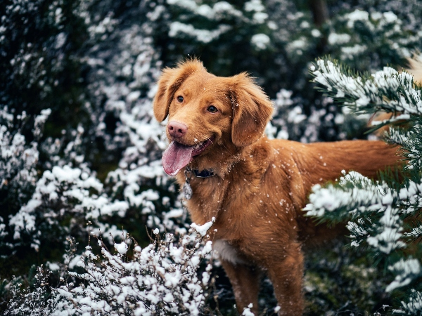 dog in snowy trees