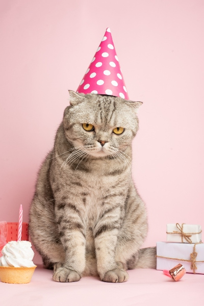 cat birthday pink party hat
