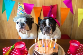 two dogs birthday party and cake