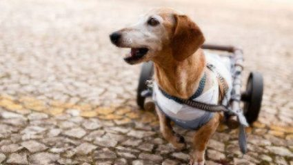 healthy paws specially abled dog