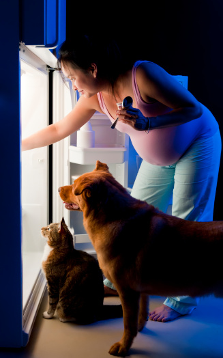 healthy paws pregnancy and pets
