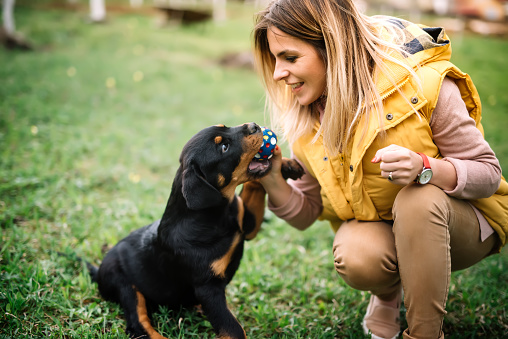 Dog Facts Rottweilers Healthy Paws