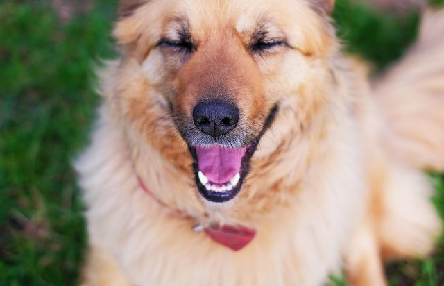 What Do Dogs Find Funny Healthy Paws