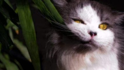 poisonous plants for cats and dogs