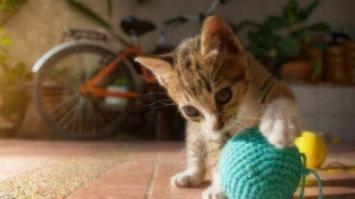 cat dominant paw