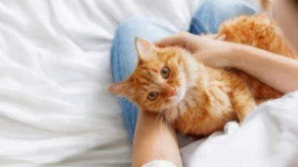 cat pet parents