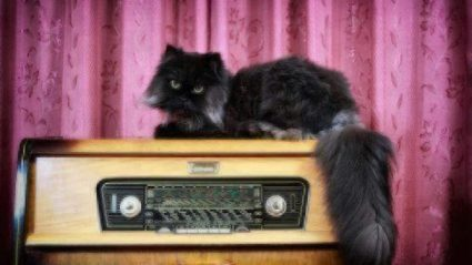 do cats like music
