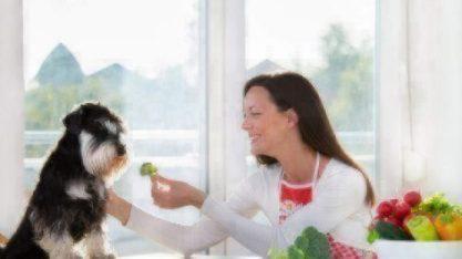 dog broccoli