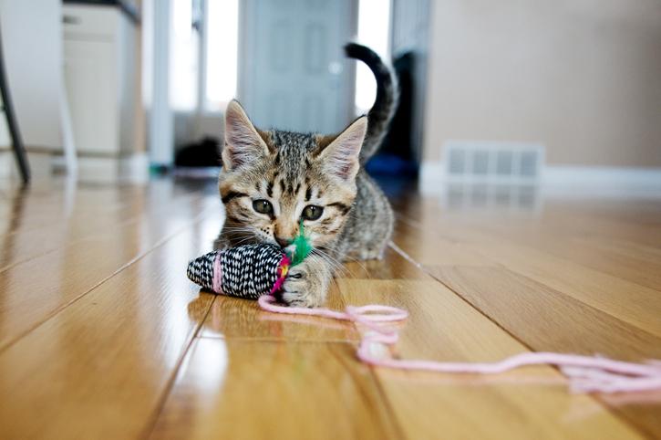 fbo cats