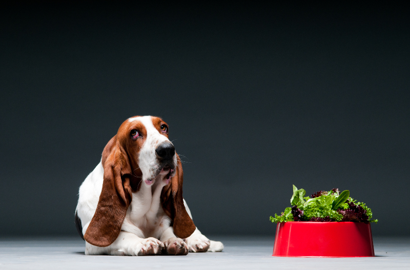 dog with bowl of lettuce