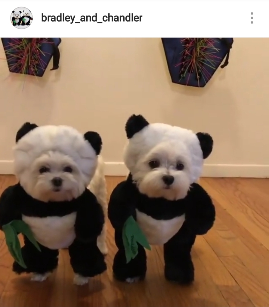 Cute Alert Pets Dressed Up As Different Animals Healthy Paws Pet