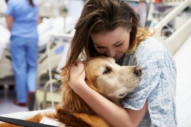 assisted animal therapy dog