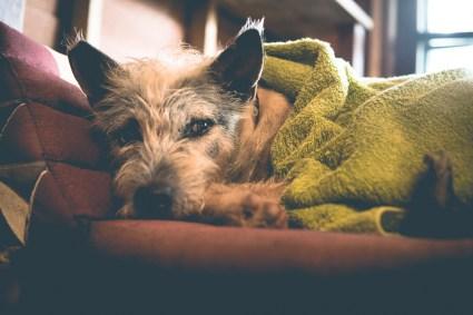 sensitive tummies dog