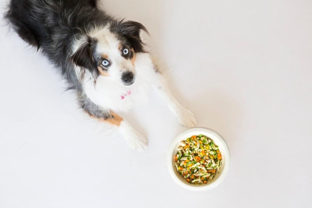 Probiotics And Pet Health Healthy Paws