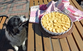 dog pie recipe