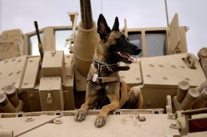 k9 veteran
