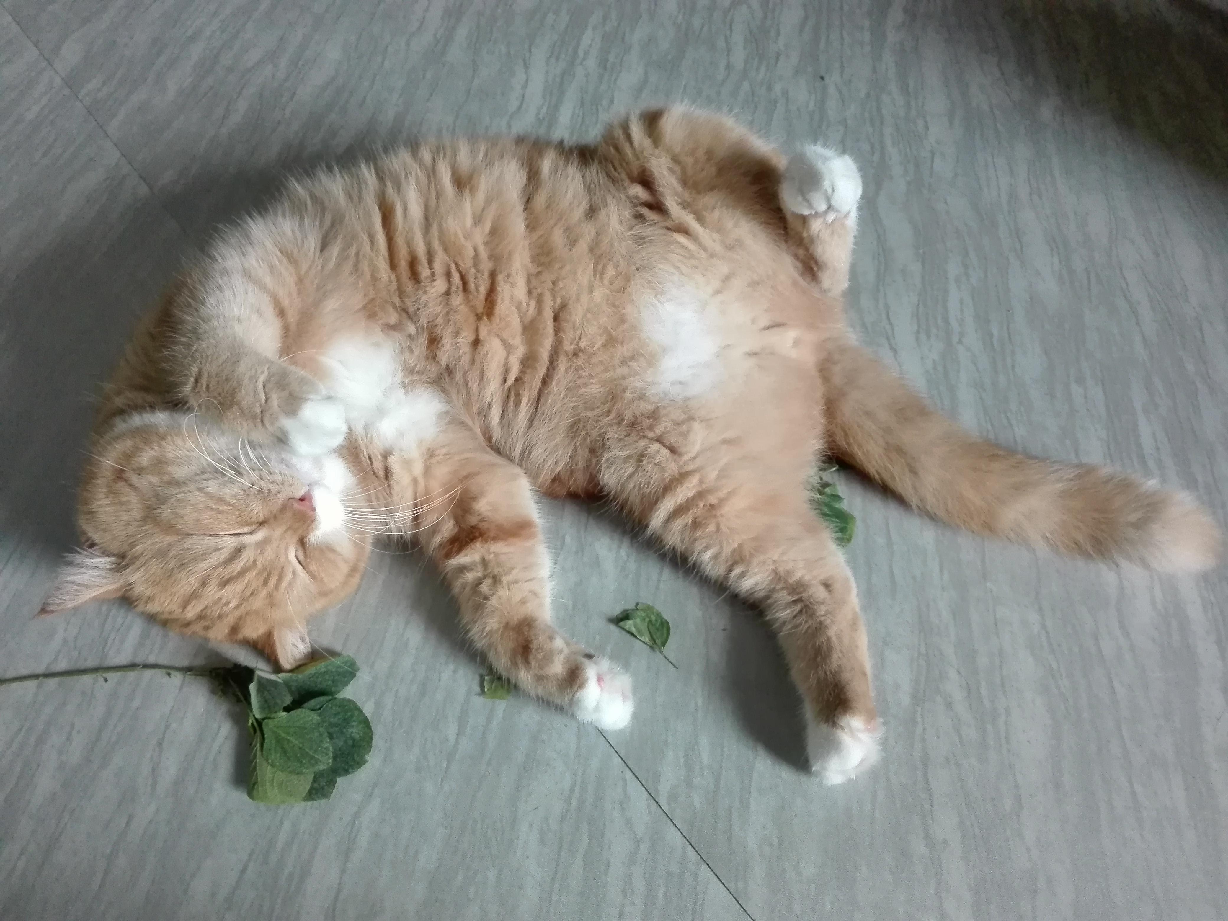 cats and catnip