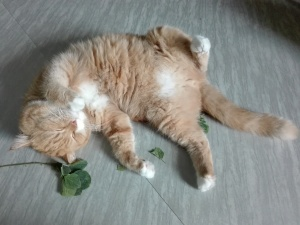 cats and catnip
