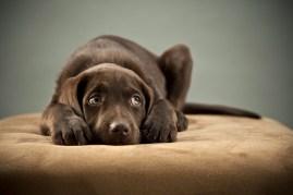behavior training dogs
