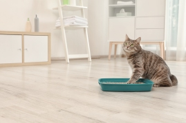7 Reasons Cats Go Outside the Litter Box