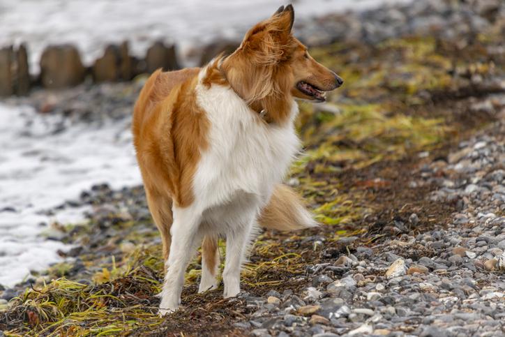dog seaweed