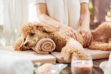 massage dog
