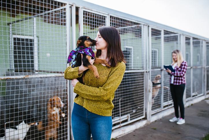 vet volunteers shelters