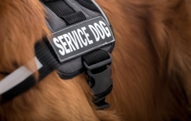 service dog fraud