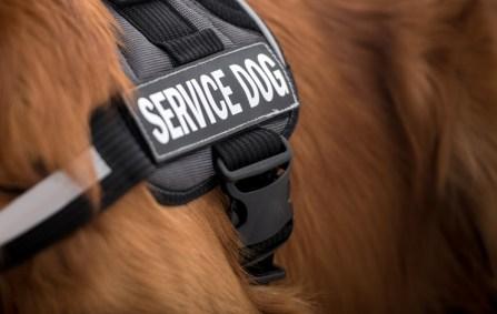 service dog fraud