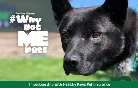 adoptable dog Moses