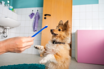 dog with toothbrush