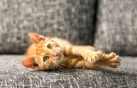 orange kitty claws