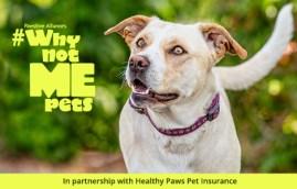 adoptable mixed breed dog