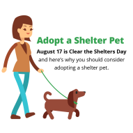 adopt a shelter pet infographic intro