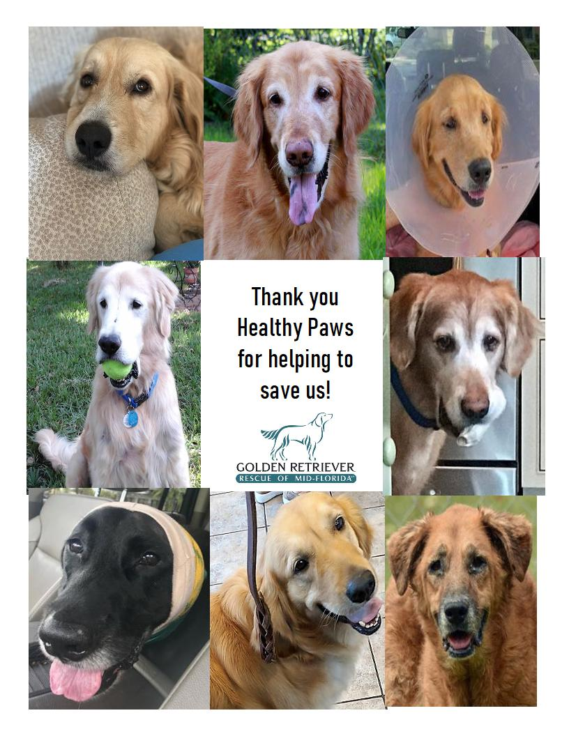 golden retriever rescue thank you