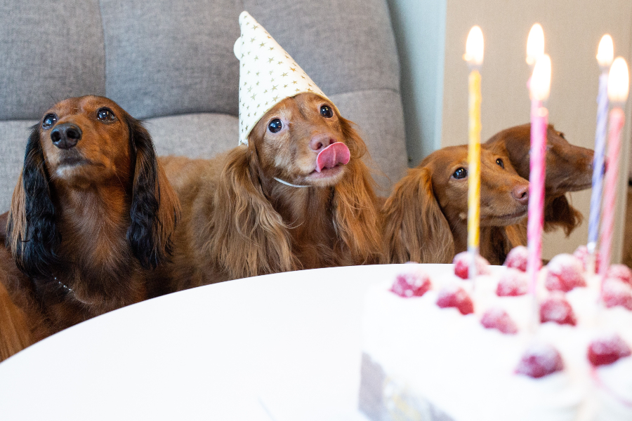 dachshund dog birthday party