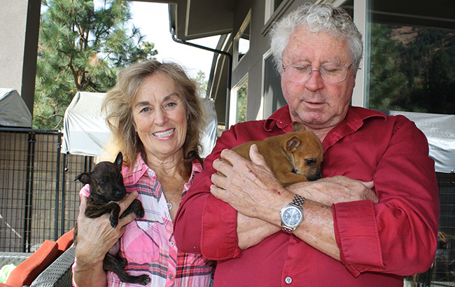 Tom and Jan Short of Cashmere, Wash. have saved more than 3,000 dogs through their non-profit shelter.