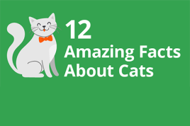 12 Amazing Facts About Cats