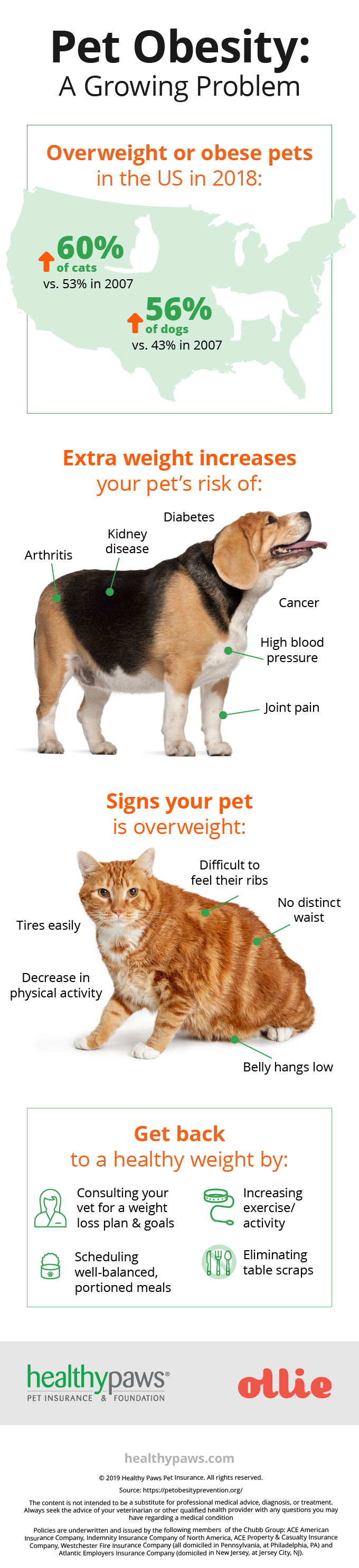 dog and cat obesity infrographic