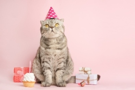 cat with party hat and presents