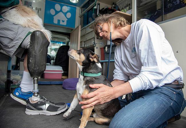 Dr. Hanna Ekstrom with a dog.