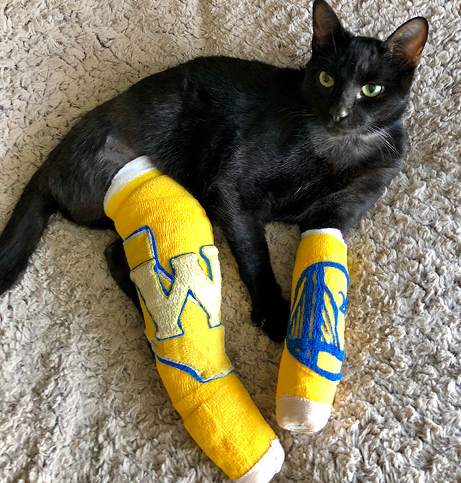 Jax the cat wearing casts