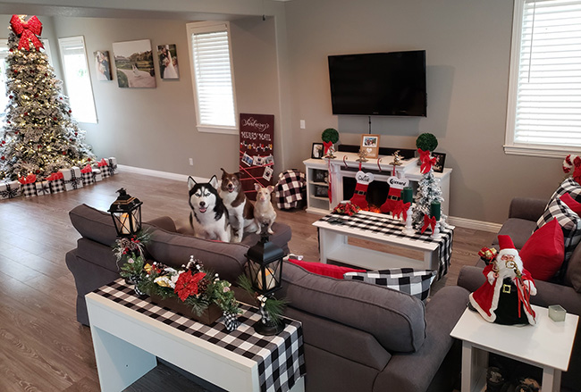 Christmasy house with 3 dogs