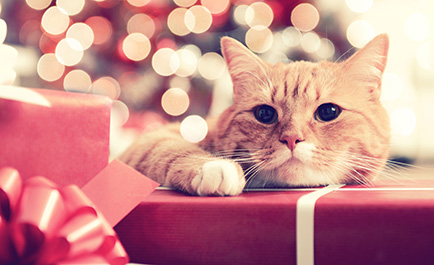 cat with gift